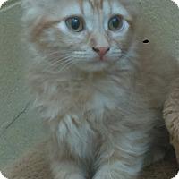 Adopt A Pet :: Max - Chula Vista, CA