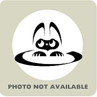 Domestic Shorthair Kitten for adoption in Menands, New York - Raphael