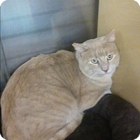 Domestic Shorthair Cat for adoption in Alexis, North Carolina - Jumper