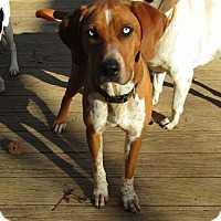 Adopt A Pet :: Molly - Spring Valley, NY