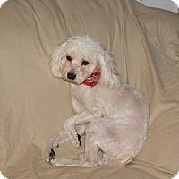 Adopt A Pet :: Spinner Beatty - Urbana, OH