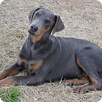 Adopt A Pet :: Smoke - Westport, CT