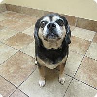 Adopt A Pet :: Stella *Petsmart GB* - Appleton, WI