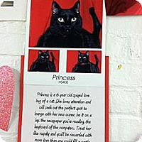 Adopt A Pet :: Princess Sandy - Whitestone, NY