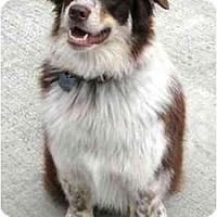 Adopt A Pet :: Jackie - Orlando, FL