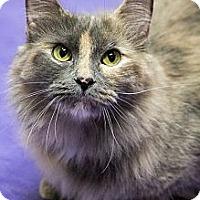 Adopt A Pet :: Odessa - Chicago, IL
