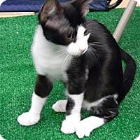 Adopt A Pet :: Frank - Bonita Springs, FL