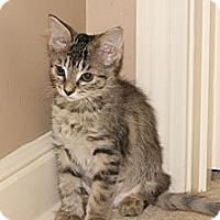 Adopt A Pet :: Layla - Memphis, TN