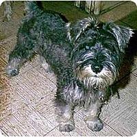 Adopt A Pet :: Hershey - dewey, AZ