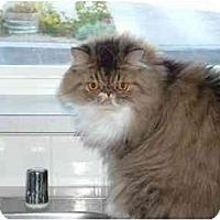 Adopt A Pet :: Benjamin - Davis, CA