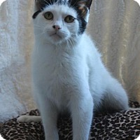Adopt A Pet :: Jenwyn - Hamilton, ON