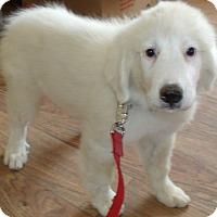 Adopt A Pet :: SHILOH - Corona, CA