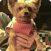 Adopt A Pet :: Daisy - Hillsboro, IL
