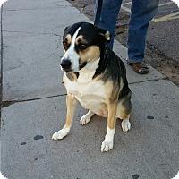 Adopt A Pet :: Mystic - Phoenix, AZ