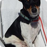 Adopt A Pet :: Belle(18 lb) Great Family Pet! - SUSSEX, NJ
