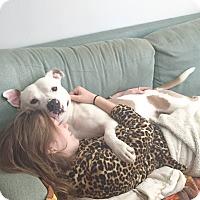 Adopt A Pet :: KANE (foster care) - Philadelphia, PA