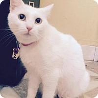 Adopt A Pet :: Loreal - Devon, PA