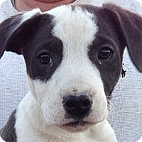 Adopt A Pet :: Outlaw (10 lb) - SUSSEX, NJ