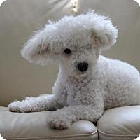 Adopt A Pet :: Feather - Palo Alto, CA