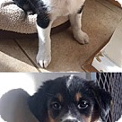 Adopt A Pet :: Sandra's Abby