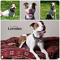 Adopt A Pet :: Lorenzo - Sioux Falls, SD