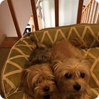 Adopt A Pet :: Bentley & Stella - N. Babylon, NY