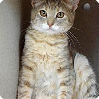Adopt A Pet :: Hayden - Dublin, CA