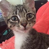 Adopt A Pet :: A383844- Willow - San Antonio, TX