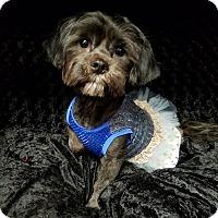 Adopt A Pet :: Cecelia Clark - Urbana, OH