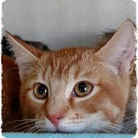 Adopt A Pet :: 8 - Pueblo West, CO