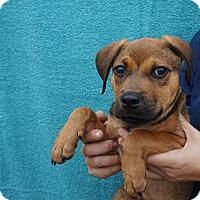 Adopt A Pet :: Teal - Oviedo, FL