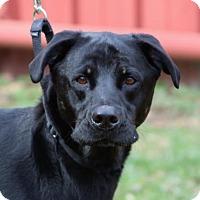 Adopt A Pet :: Sadie Jo - Asheville, NC