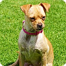 Adopt A Pet :: Letti