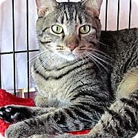 Adopt A Pet :: Sirius - Seminole, FL