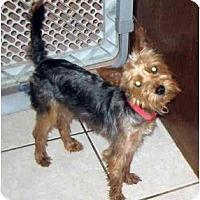Adopt A Pet :: Dodger - Conroe, TX