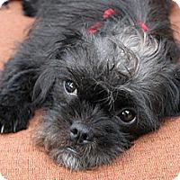Adopt A Pet :: Celie - Tumwater, WA