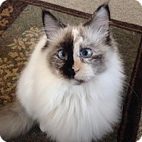 Adopt A Pet :: Rosita - Eagan, MN