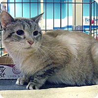 Adopt A Pet :: Misty - Pittstown, NJ