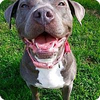 Adopt A Pet :: Serena - Cerritos, CA