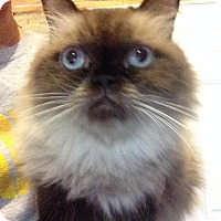 Adopt A Pet :: Kasia - St. Louis, MO