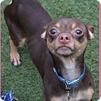 Adopt A Pet :: James brown - springtown, TX