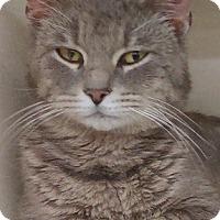 Adopt A Pet :: Logan-10 MONTHS - Naperville, IL