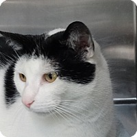 Adopt A Pet :: Marco - Elyria, OH
