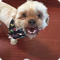 Adopt A Pet :: Rupert - Encino, CA