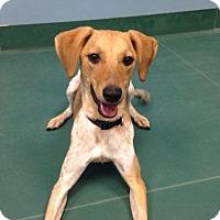 Adopt A Pet :: Iggy - Waldorf, MD