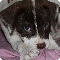 Adopt A Pet :: Rex - Danbury, CT