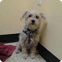 Adopt A Pet :: Chula - Thousand Oaks, CA