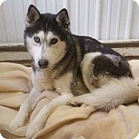 Adopt A Pet :: Helen - Pottsville, PA