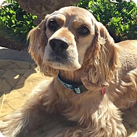 Adopt A Pet :: Pluto - Santa Barbara, CA