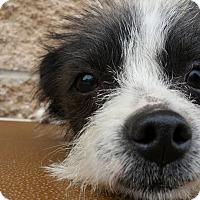 Adopt A Pet :: Spot - Marion, IN